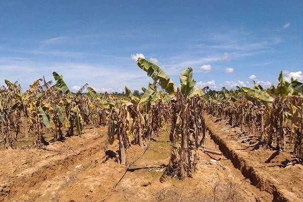 Dồn sức cho 'canh bài' nông nghiệp, bầu Đức nhận tin dữ từ Lào