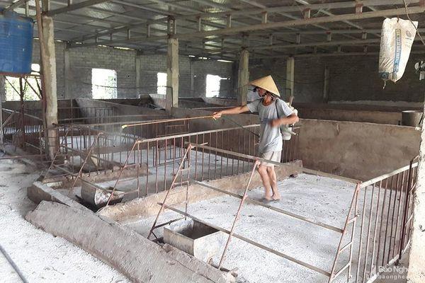 Quỳnh Lưu: Dịch tả lợn châu Phi tái phát nhanh, có nhà xóa sổ cả trang trại