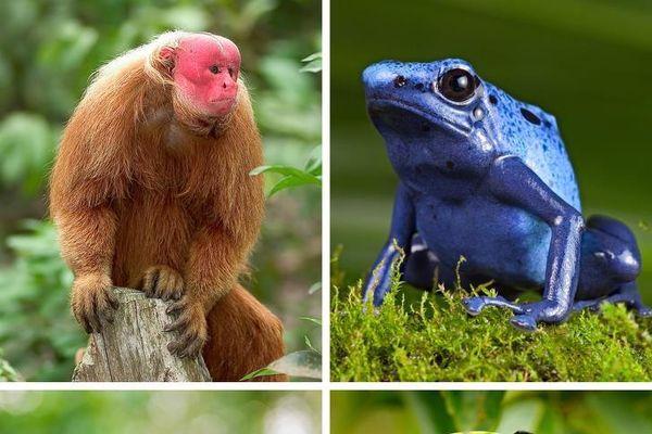 11 điều tồi tệ sẽ xảy ra khi rừng Amazon bị 'xóa sổ' hoàn toàn (P1)