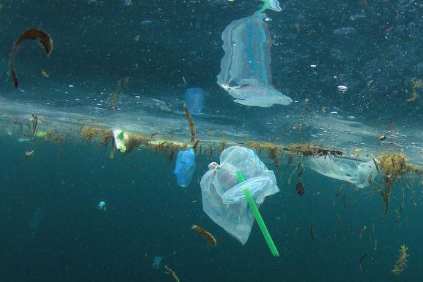Ống hút giấy tốt hơn ống hút nhựa, nhưng có thực sự vì môi trường?