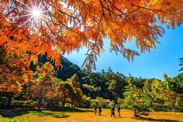 Đài Loan mùa thu, đi đâu thưởng ngoạn mùa lá đỏ?