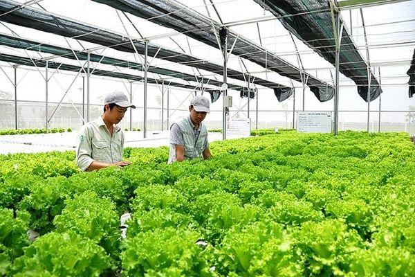 Doanh nghiệp Nhật Bản: Tăng đầu tư vào nông nghiệp Việt