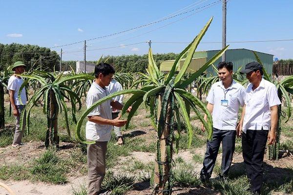 Tạo chuỗi liên kết phát triển nông nghiệp ở Ðồng Nai