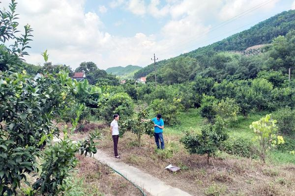 Vân Đồn: Tạo diện mạo mới vùng nông thôn, miền núi, hải đảo