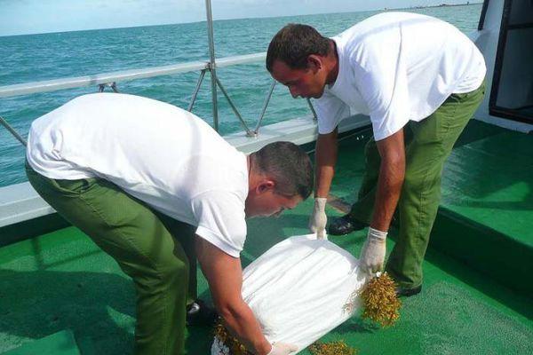 Cuba thực hiện chính sách 'không khoan nhượng' với ma túy