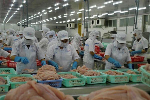 Mỹ công nhận hệ thống kiểm tra, kiểm soát cá tra của Việt Nam