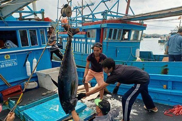 Liên kết chuỗi cá ngừ giúp ngư dân bán cá ổn định