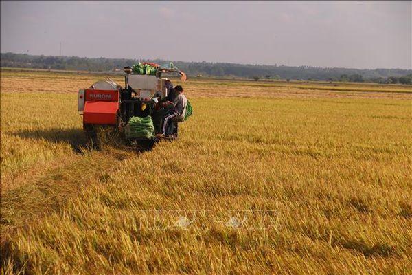 Việt Nam đứng thứ 4 Đông Nam Á về an ninh lương thực