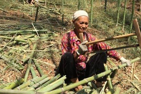 Xóa đói giảm nghèo từ cây trúc sào