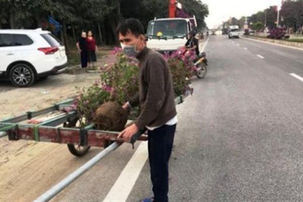 Trộm cây cảnh về bán: Để ở nhà một cây