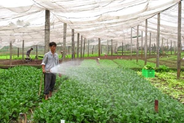 Hà Nội vẫn còn 'rau an toàn' có lượng thuốc bảo vệ thực vật vượt ngưỡng cho phép