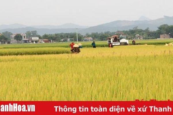 Thiệu Hóa xây dựng và phát triển vùng nguyên liệu lúa hữu cơ
