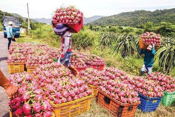 Dịch bệnh virus corona: Cơ quan đại diện, doanh nghiệp Hàn Quốc chung tay giải cứu hoa quả Việt