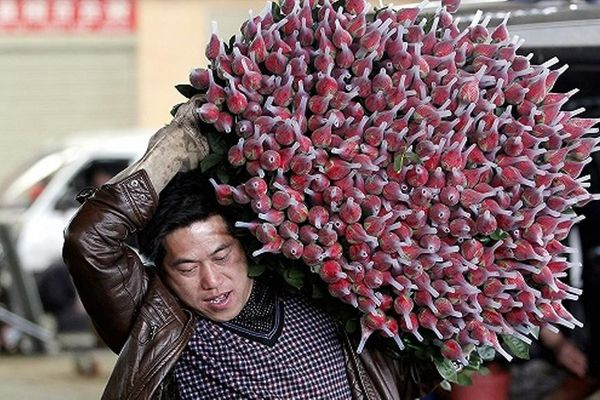 Trung Quốc: Nông dân trồng hoa khốn đốn vì dịch COVID-19