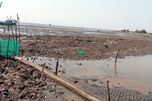 Hàng trăm ha nghêu chết, nông dân Bến Tre thiệt hại hàng chục tỷ đồng