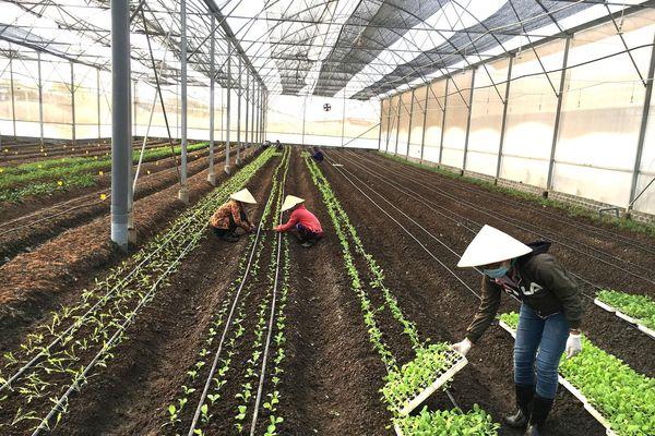 Nông thôn mới TPHCM trên đà phát triển - Bài 3: Gỡ khó cho sản xuất lớn