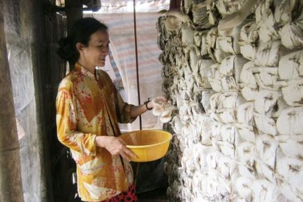 Nâng cao hiệu quả hoạt động của các tổ hợp tác trồng nấm
