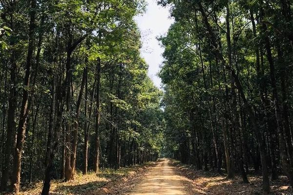 Khuyến cáo mùa vụ trồng rừng