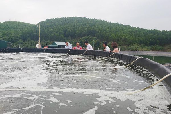 Nuôi tôm công nghệ: Hướng phát triển bền vững ngành thủy sản ở Tiên Yên