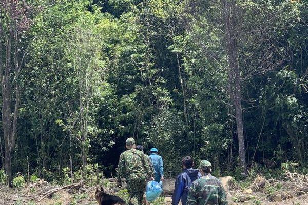 2 cô gái hái măng bị lạc trong rừng đã về nhà