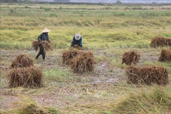 Từ ngày 11 - 12/5, mưa giông mở rộng xuống các tỉnh Bắc Trung Bộ