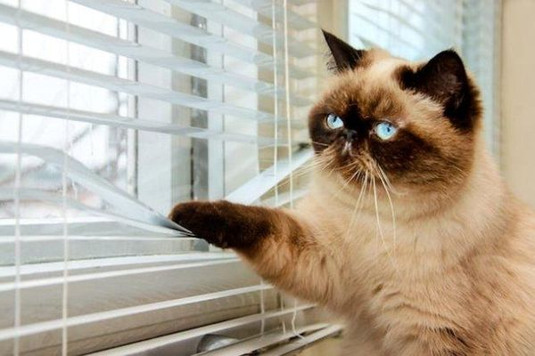 Ca nhiễm virus SARS-CoV-2 đầu tiên trên mèo ở Liên bang Nga
