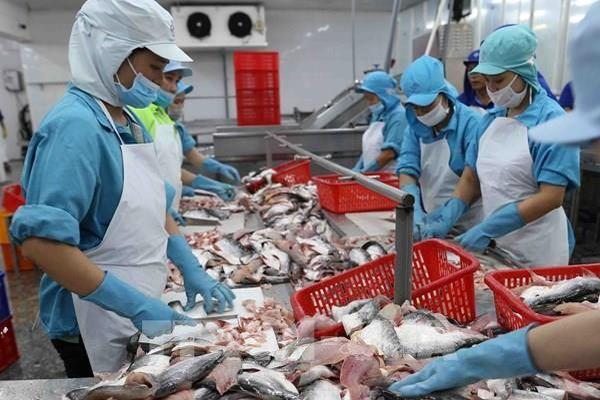 VASEP: Ít nhất hết quý II, xuất khẩu cá tra sang thị trường lớn chưa thể tăng trưởng dương