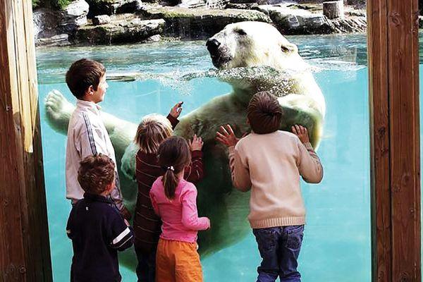 Vườn thú ở Pháp hồi sinh sau đại dịch