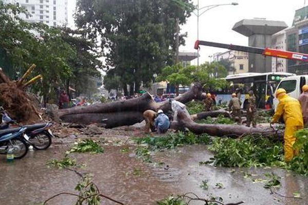 Mùa mưa bão, Hà Nội khám bệnh cây xanh thế nào để tránh gãy đổ?