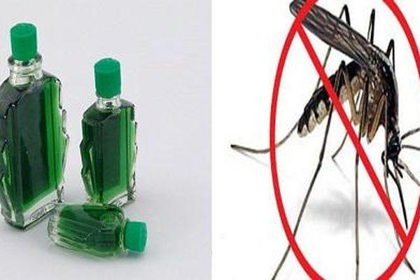 Mẹo 'cực độc' để lũ muỗi tự 'cao chạy xa bay' chỉ với 3 giọt dầu gió