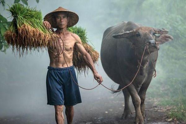 15 hình ảnh về văn hóa thế giới thu hút cộng đồng mạng