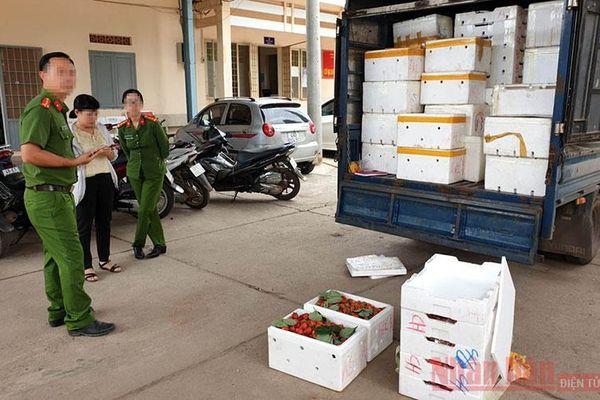 3,5 tấn dâu tây không rõ nguồn gốc tuồn vào Đà Lạt