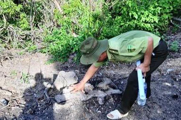 Chỉ đạo công an điều tra vụ phá rừng ở Bình Định