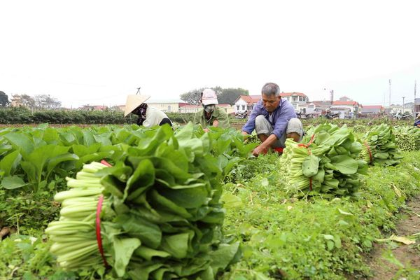 Rau xanh, củ quả tươi tại Hà Nội tăng giá do mưa bão