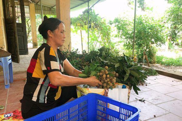 Hỗ trợ, tháo gỡ khó khăn cho trái nhãn trong mùa dịch Covid - 19