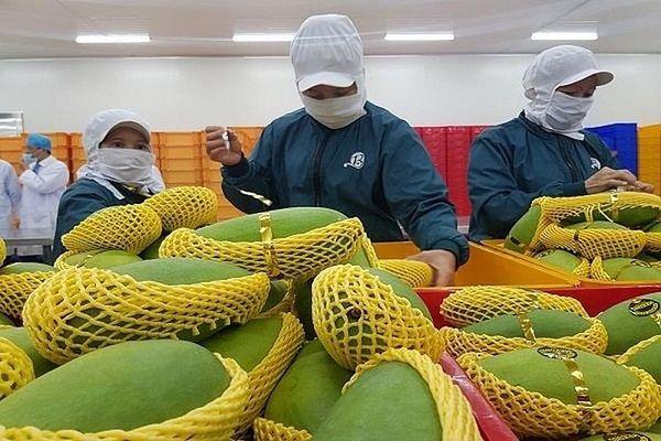 Trái cây Việt Nam nghẽn đường sang Mỹ do thiếu kiểm dịch viên