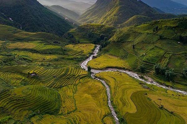 Bức tranh vàng óng dưới chân núi Ngũ Chỉ Sơn