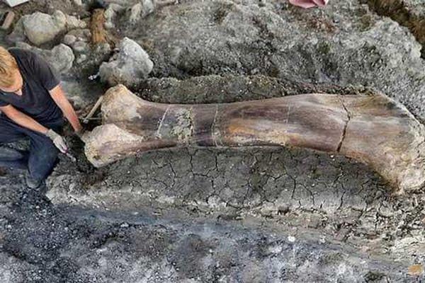 Xương đùi nửa tấn hé lộ 'siêu quái vật' thời tiền sử