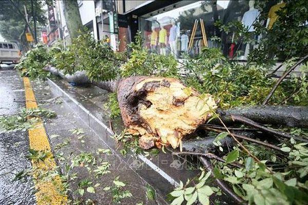 Cơn bão Bavi gây thiệt hại lớn cho Triều Tiên và Hàn Quốc
