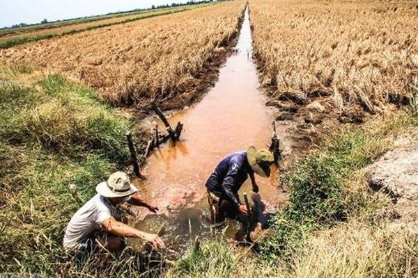 Liệu Đồng bằng sông Cửu Long có thể ngọt lại?