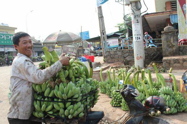 Đánh thức nông sản miền Tây Quảng Trị: (Bài 1) Đổi thay nhờ chuối Mật mốc