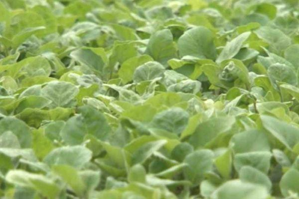 Hà Nội: Kiếm 50 triệu đồng/tháng nhờ trồng rau hữu cơ