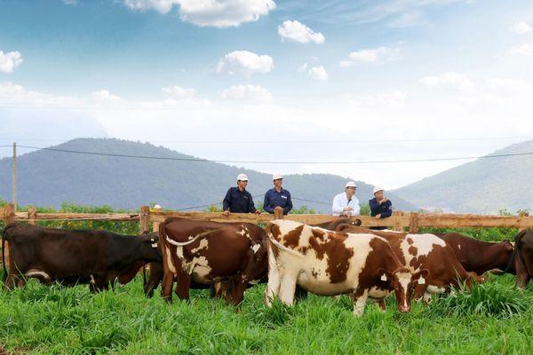 Kinh doanh thua lỗ, Đức Long Gia Lai vẫn 'lấn sân' mảng chăn nuôi bò sữa
