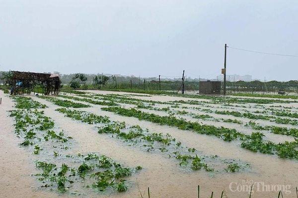 Đà Nẵng: Triển khai các biện pháp cấp bách ứng phó với 'bão chồng lũ'