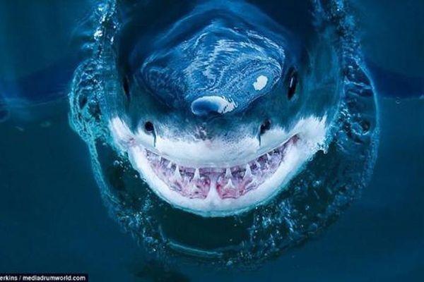 Rùng mình nụ cười nham hiểm của sát thủ đại dương khi săn mồi