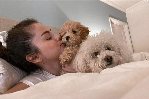 Những chú chó bị bỏ rơi đổi đời khi được người nổi tiếng nhận nuôi
