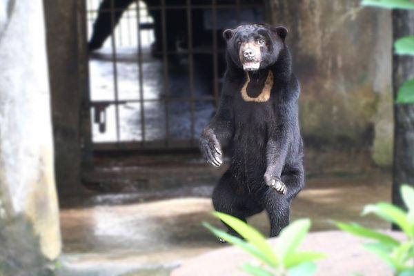 Loài gấu nhỏ nhất sống trong Thảo Cầm Viên Sài Gòn có gì đặc biệt?