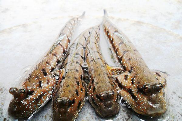 Đặc sản cá bống sao rừng Sác