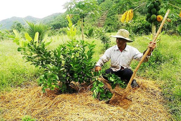 Diên Khánh: Hoạt động khuyến nông chờ cơ chế