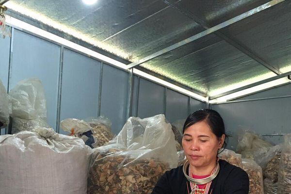 Lương y Triệu Thị Hòa và gùi thuốc trong rừng già chữa khỏi đau nhức tê mỏi xương khớp